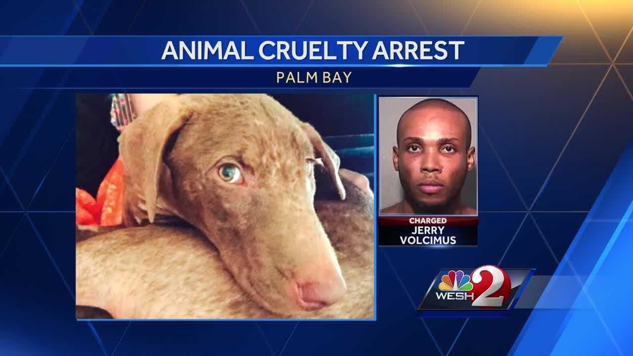 animal cruelty arrest