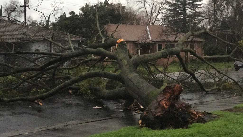 Strong winds topple trees, knock out power across Valley
