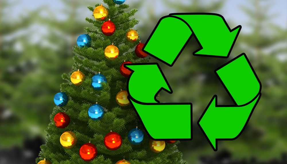 Compost your Christmas tree for free in the Grand Valley