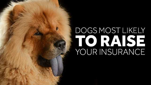 Dangerous Dog Breeds Homeowners Insurance