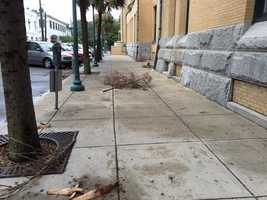 Debris in Savannah