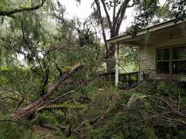 Vernonburg fallen tree