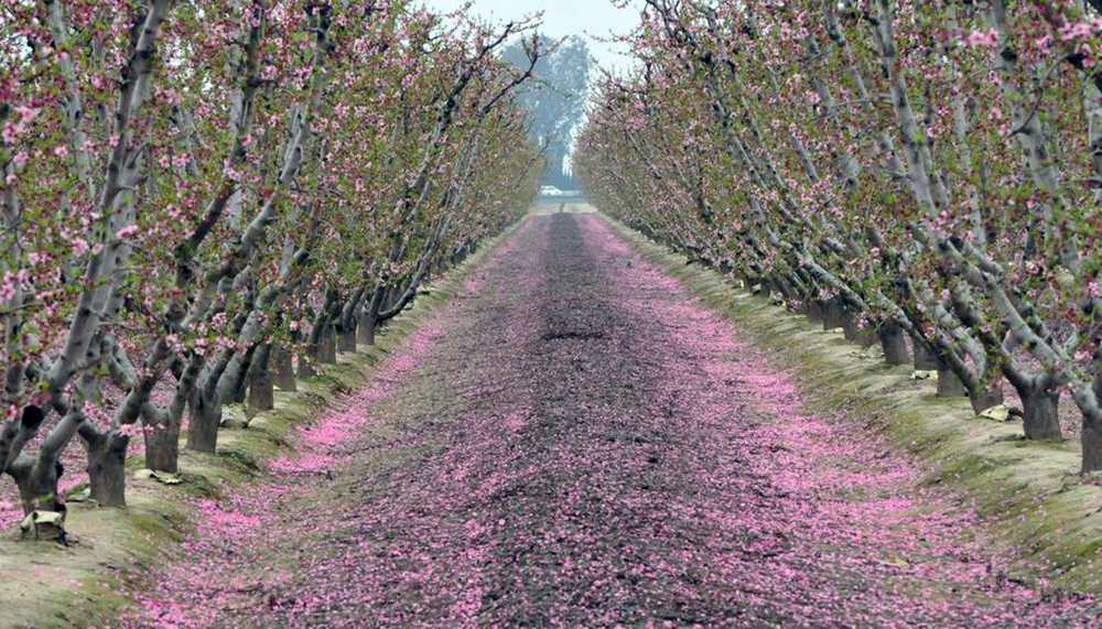 Over 80% loss in blueberry & peach crops after Deep South freeze