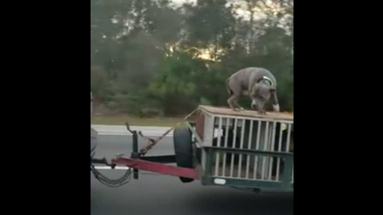 Dog chained atop crate towed on highway; owner investigated