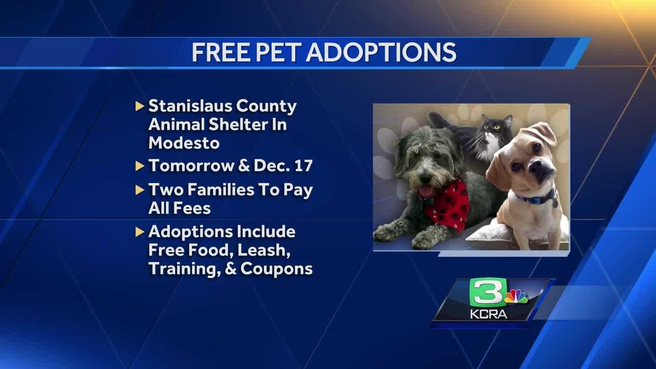 Lubbock Animal Services Warns About Gifting Pets For Christmas