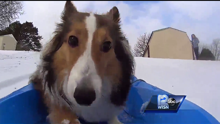 Roxie The Sled Dog Video