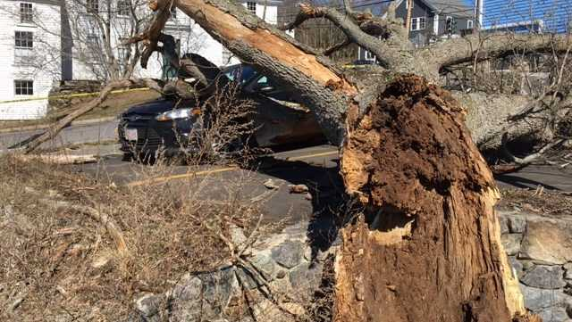 Strong winds topple trees, knock out power