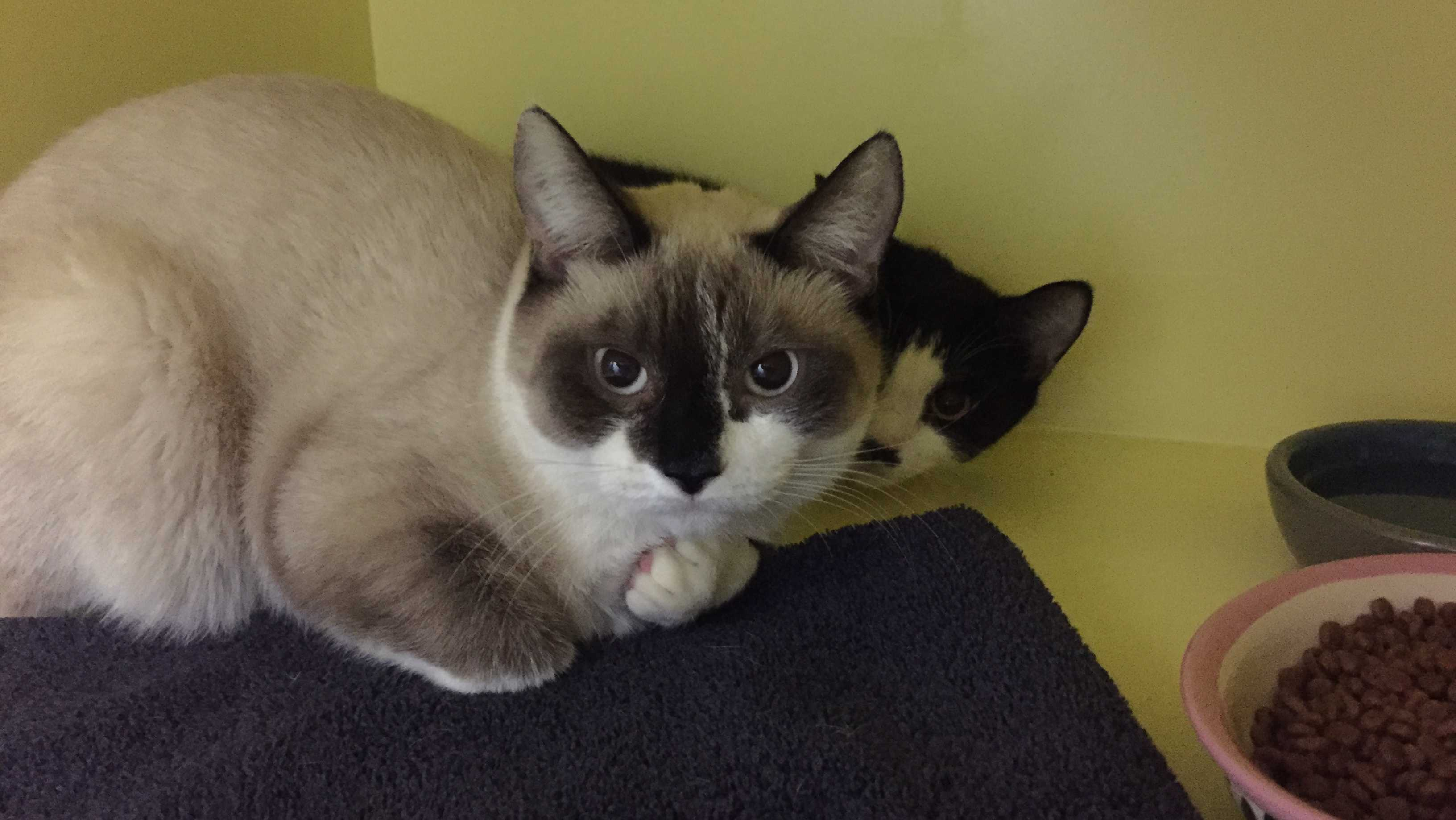 Fall River Mspca Looking For Help After Dozens Of Cats