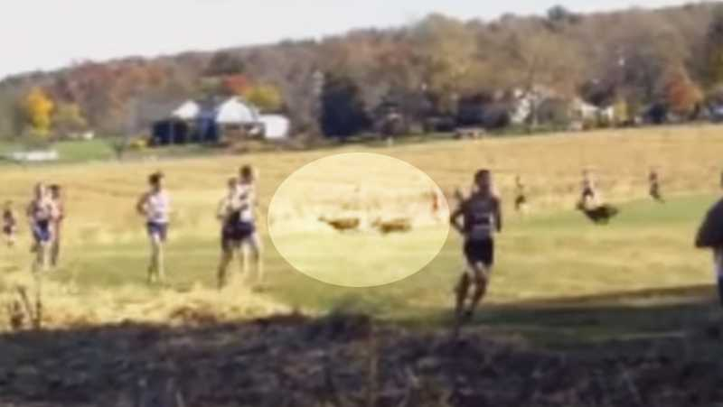 Deer hits cross-country runner