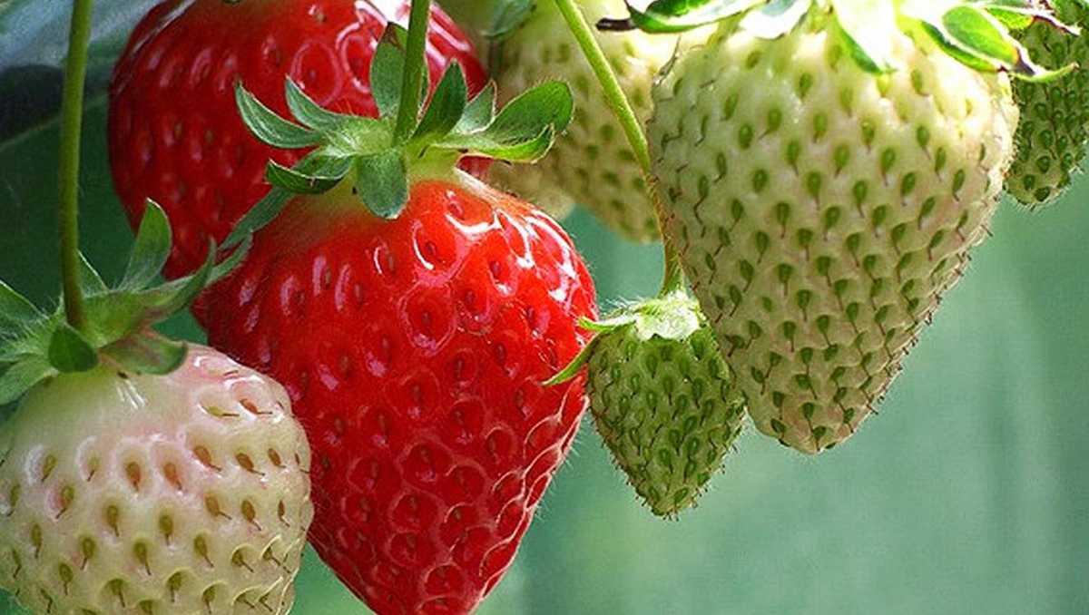 New report finds Santa Cruz County crops worth $581 million