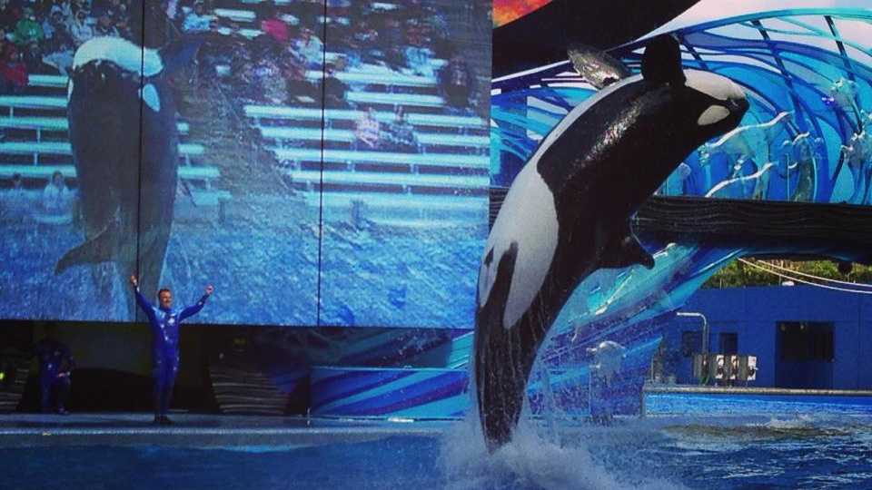 SeaWorld Cutting 320 Jobs in Restructuring