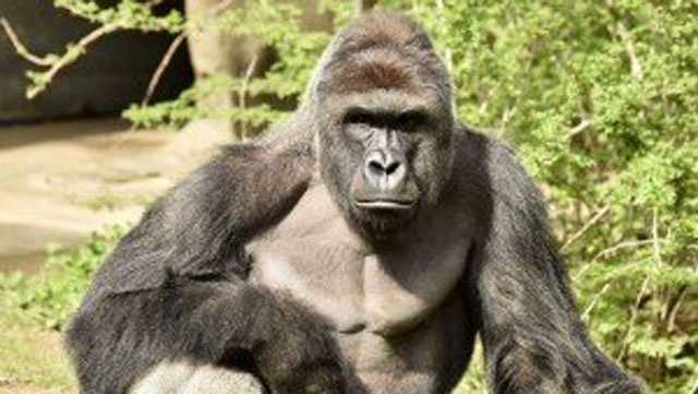 After report, family of boy in gorilla pen again thanks zoo