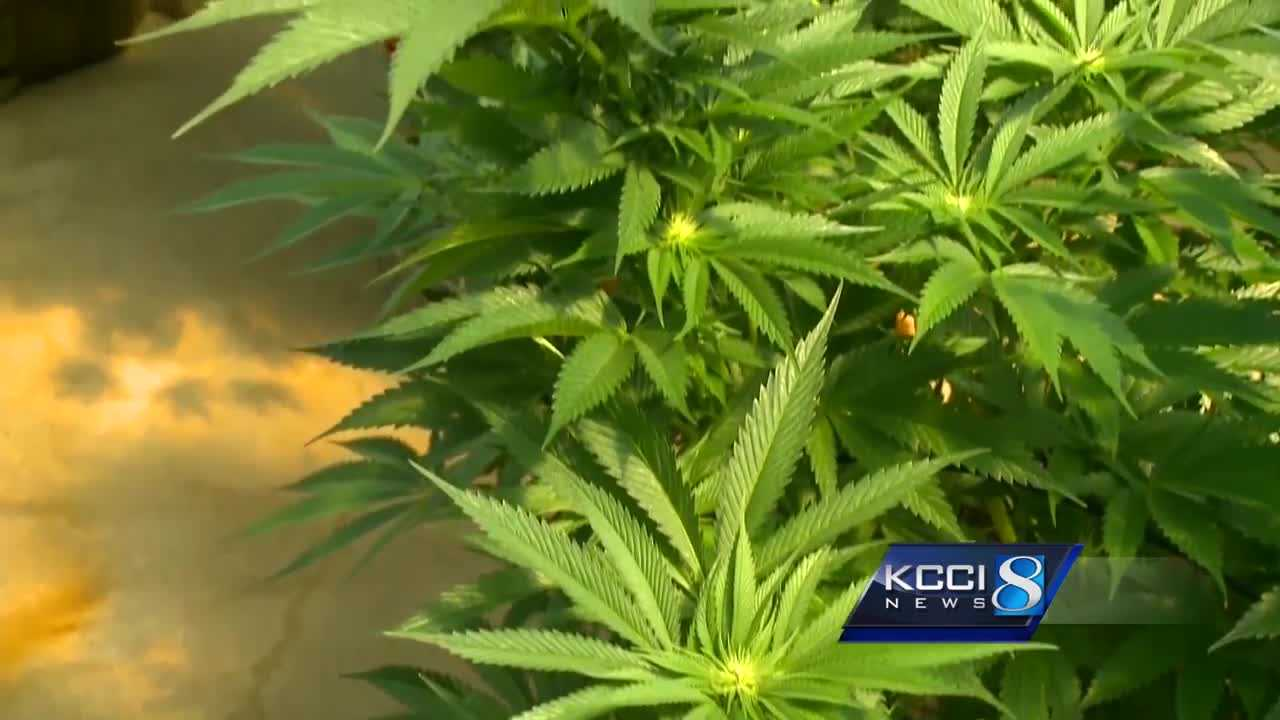 Battle to legalize medical marijuana in Iowa rages on