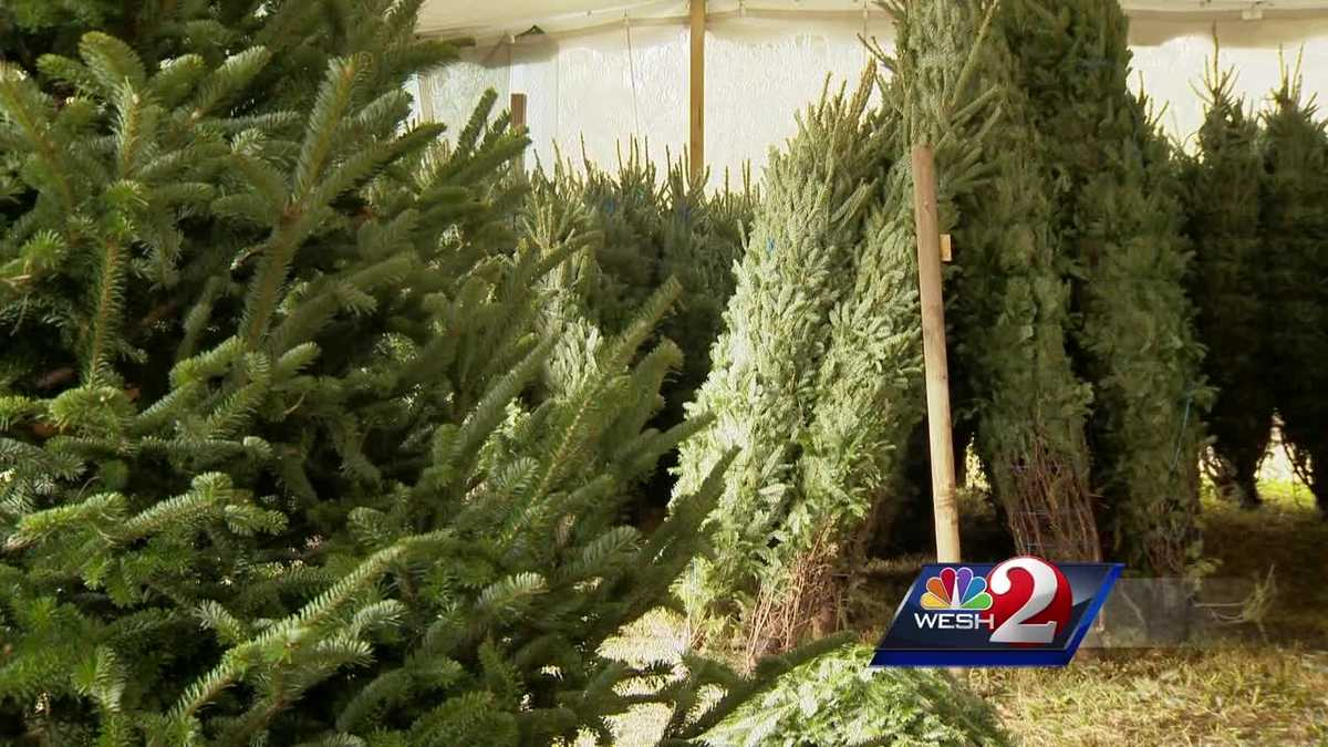 How to choose the perfect christmas tree How to dress the perfect christmas tree