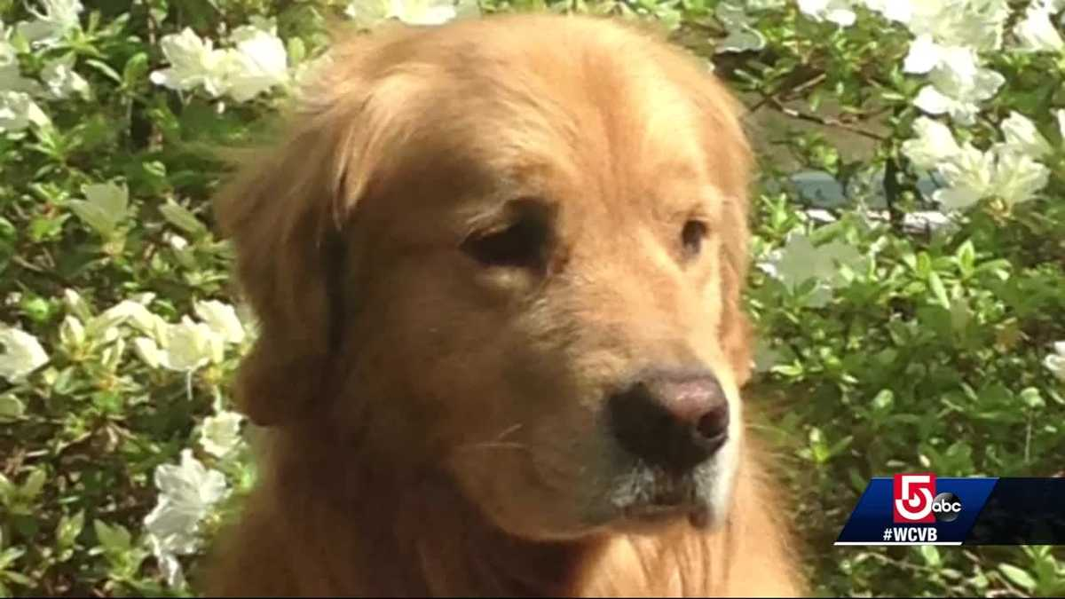 Groomer charged with animal cruelty in dog's death