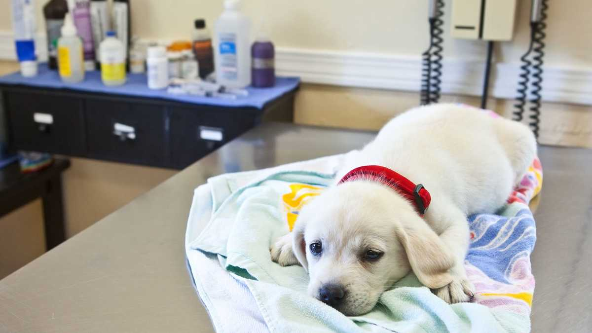 The dog flu is spreading across the U.S. for the first time in years