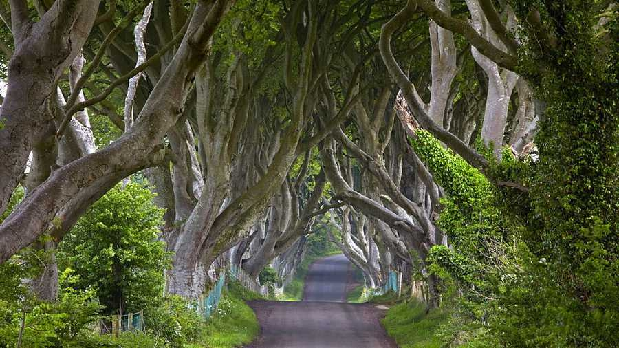 Dark Hedges road, Northern Ireland