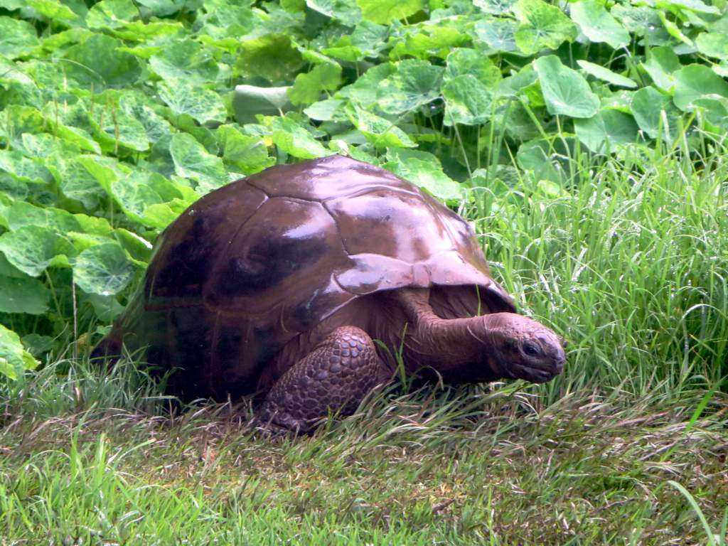 The world's oldest living land creature is a gay tortoise named ...