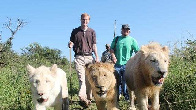 Lion Walk 1 - 30409625