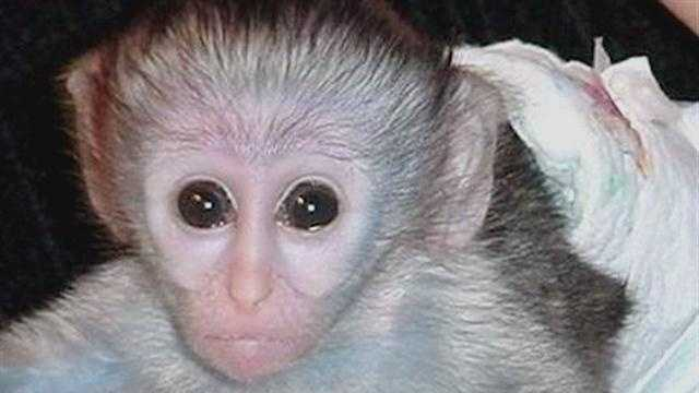 DHS investigates monkey scratch at daycare