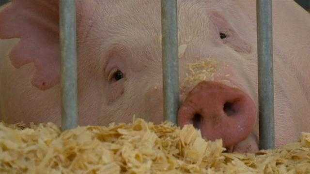 With only two days left before the opening of the Iowa State Fair, health officials are warning people about a new flu virus spreading from pigs to people.