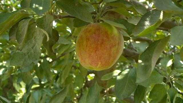 KCCIs Angie Hunt visits Deal's Orchard in Jefferson to check the Iowa apple crop.