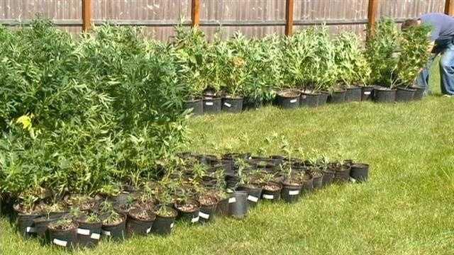 Pot bust back yard