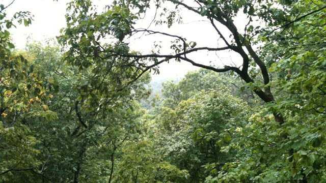 Iowa woods generic