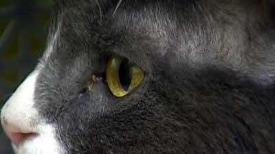 KETV Cat