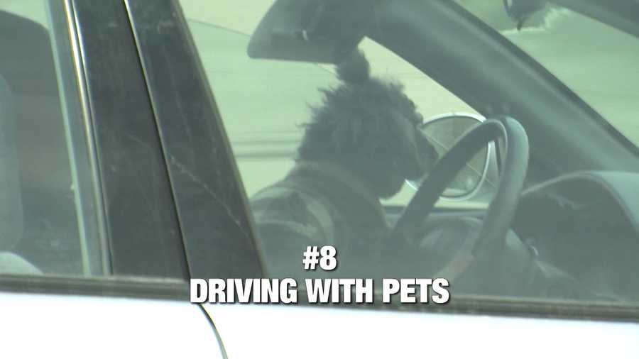 """Jackie Stanley says she's seen it all out on the road. And she helps us begin with bad driving habit number 8, complaints about our beloved pets in the driver's lap. """"The pet is moving around so I don't see how they can see to driver so I don't know how it's safe for them or the pet,"""" said Stanley."""
