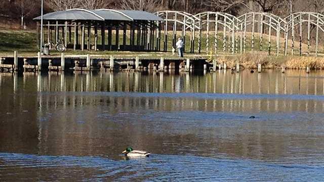 Greenwood park ducks pond