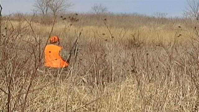 Pheasant Hunting Making A Comeback in Iowa