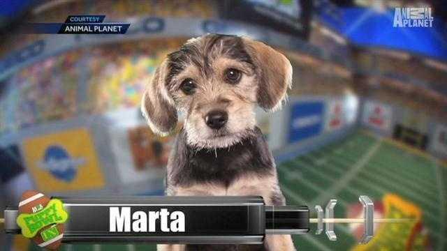 Marta Puppy Bowl
