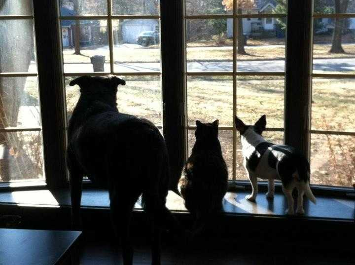 """""""Watching the squirrels play: """"This was taken from my family room window from my Beaverdale home of my threebabies. They all wanted to go out side. Max, Mary Sue, and Oreo Left to right."""""""