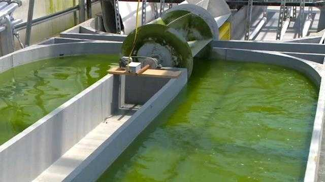 Orders for algae are flooding into Iowa State University after a new production facility went online.