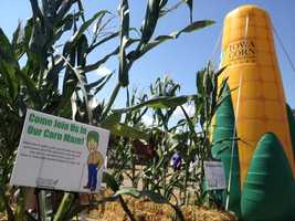 Iowa State Fair corn day