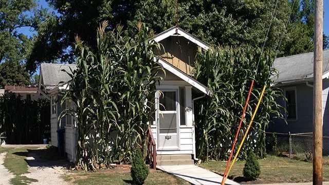 the corn house