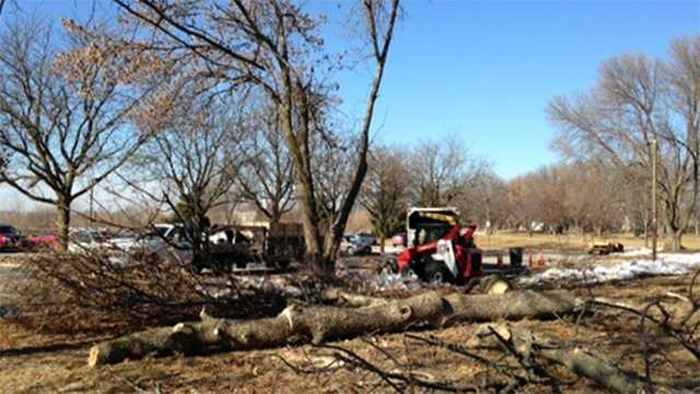 Johnston is cutting down ash trees before the Emerald Ash Borer arrives.