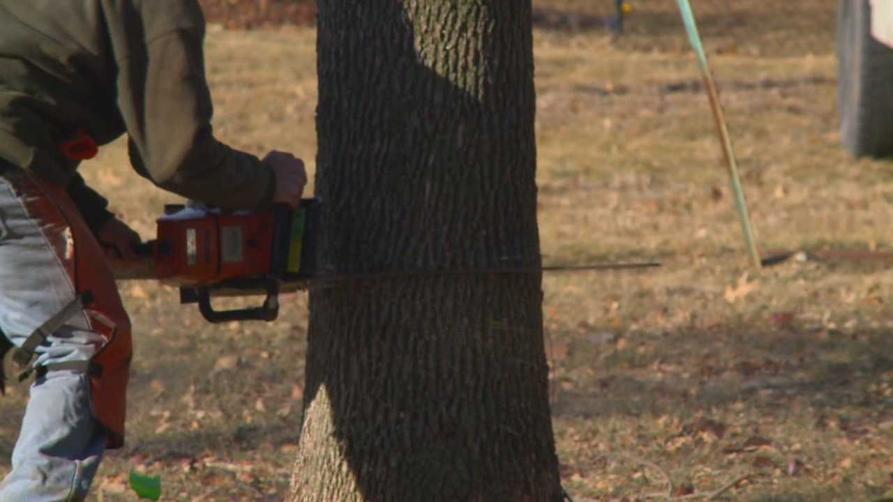 A deadly beetle known as emerald ash borer is invading Iowa and preying on ash trees. The city of Johnston is taking a proactive approach in dealing with the problem.