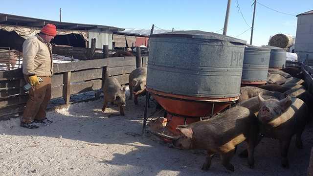 farmer hog winter iowa generic