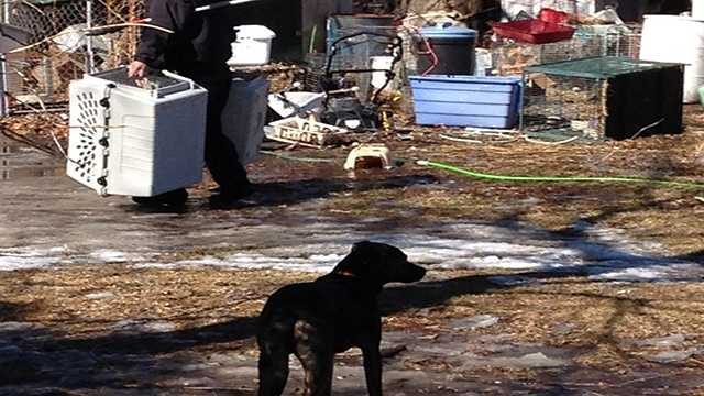 Animals placed in carriers and removed from a home in Drakesville, Iowa.
