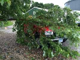 Trees down in Randall, Iowa