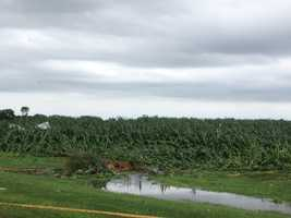 In other areas, like Stuart, wind did more damage to crops than the hail.
