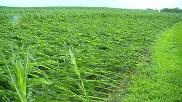 Winds just flatten some fields near Little Wall Lake, Iowa.