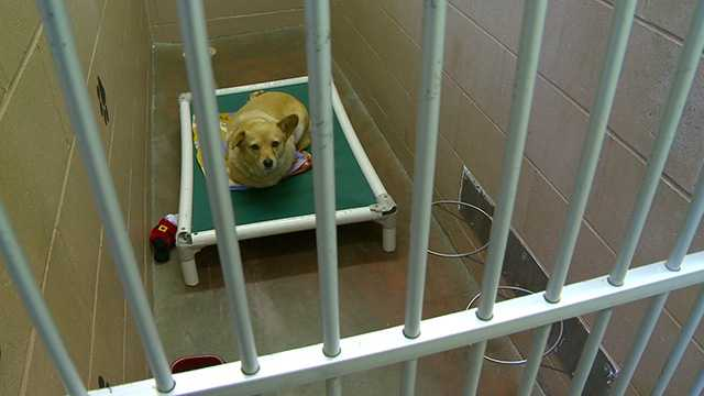 dog pet cage generic