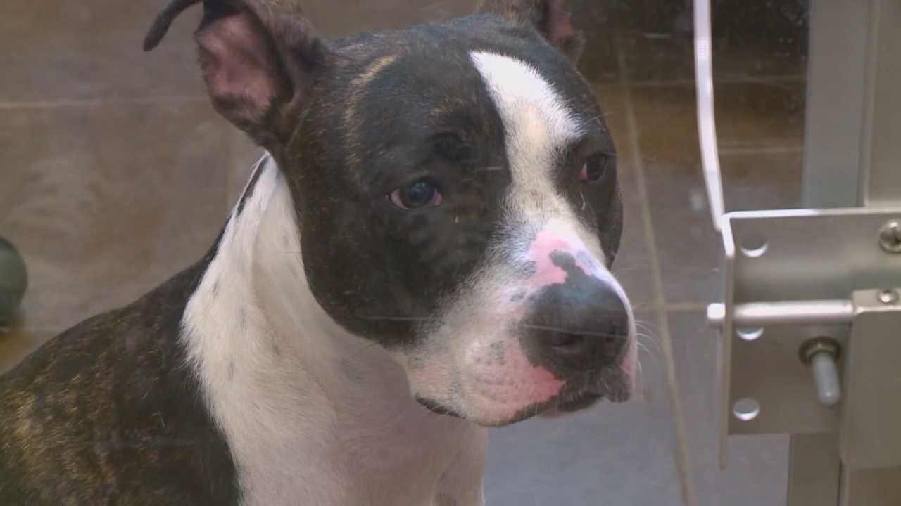 Dog owner pushes to change city ordinance on vicious breeds
