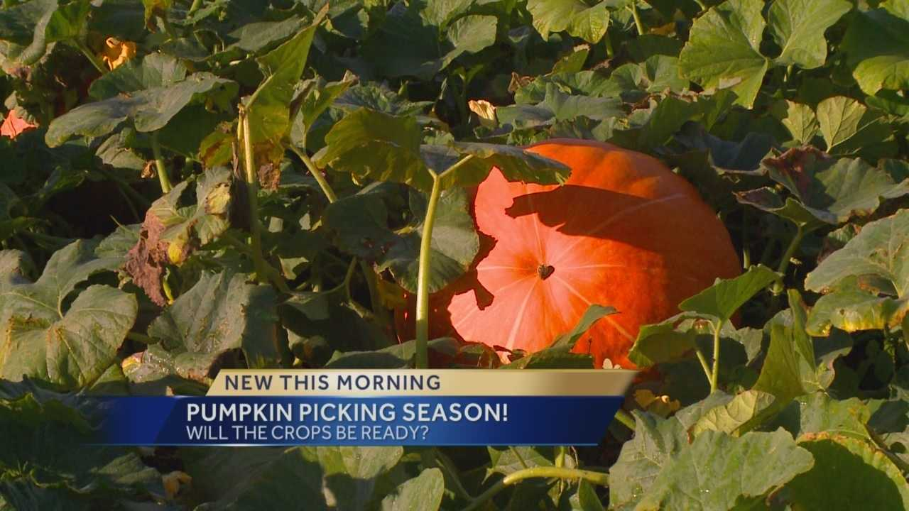 A live report on KCCI 8 News This Morning.