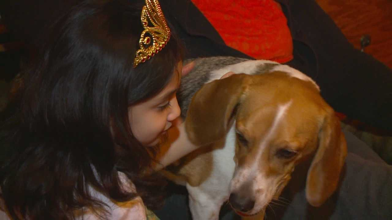 The family's beagle, Chip, suffered an attack from a pit bull