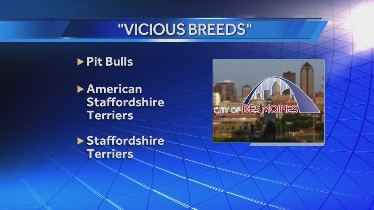 """The city's decision to not review or remove the """"breed-specific"""" rules is frustrating some local dog owners."""
