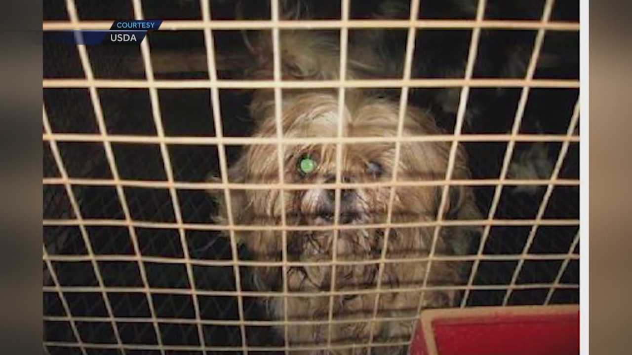 Iowa has long been known for its puppy mills, which is a reputation one proposed legislation is trying to change.
